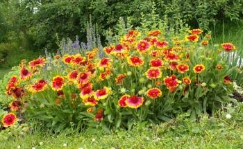 Ученици от Училища ЕВРОПА засаждат цветя в градинка в Пловдив
